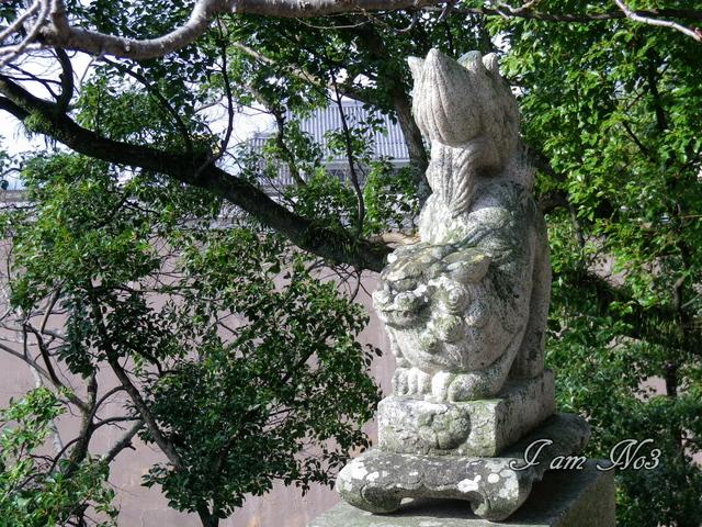 IMGP0226.jpg
