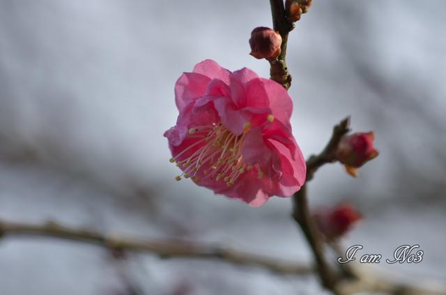 K5B_6797.jpg